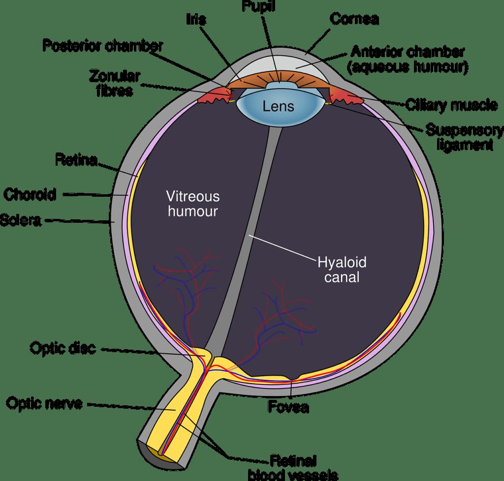 What Is Vision Reducing Disease?